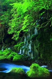 新緑の元滝伏流水の写真素材 [FYI00314941]