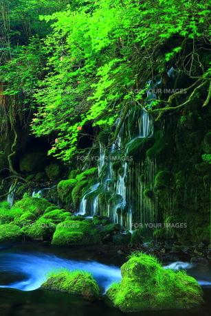 新緑の元滝伏流水の素材 [FYI00314970]