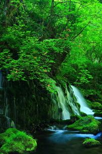 新緑の元滝伏流水の写真素材 [FYI00314973]