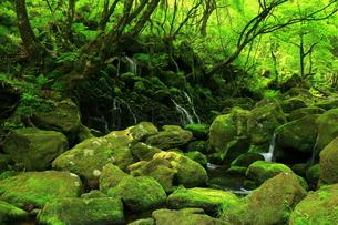 秋田県 元滝伏流水の夏の写真素材 [FYI00314981]