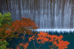 岩手県八幡平 紅葉の松川渓流の写真素材 [FYI00314998]