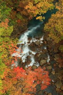 岩手県八幡平 紅葉の松川渓流の写真素材 [FYI00315000]