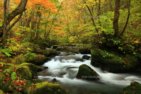 青森県 紅葉の奥入瀬渓流の素材 [FYI00315008]