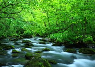 夏の奥入瀬渓流 三乱の流れの写真素材 [FYI00315033]