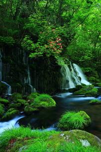 秋田県鳥海山 夏の元滝伏流水の写真素材 [FYI00315101]