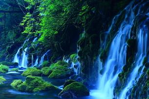 夏の元滝伏流水の写真素材 [FYI00315106]