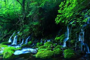 夏の元滝伏流水の写真素材 [FYI00315110]
