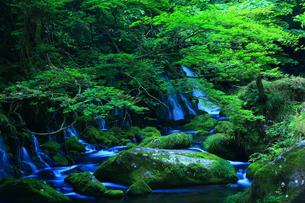 夏の元滝伏流水の写真素材 [FYI00315113]