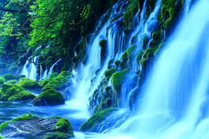 夏の元滝伏流水の写真素材 [FYI00315126]