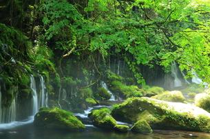 秋田県 夏の元滝伏流水の写真素材 [FYI00315225]
