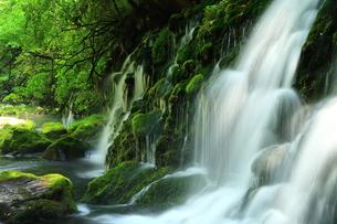 秋田県 夏の元滝伏流水の写真素材 [FYI00315231]