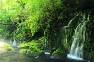 秋田県 夏の元滝伏流水の写真素材 [FYI00315234]