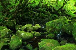 秋田県 夏の元滝伏流水の写真素材 [FYI00315235]