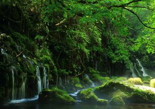 秋田県 夏の元滝伏流水の写真素材 [FYI00315236]