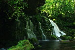 秋田県 夏の元滝伏流水の写真素材 [FYI00315237]