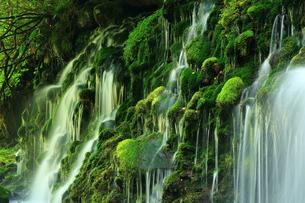 秋田県 夏の元滝伏流水の写真素材 [FYI00315238]