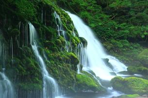 秋田県 夏の元滝伏流水の写真素材 [FYI00315239]