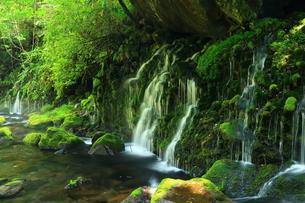 秋田県 夏の元滝伏流水の写真素材 [FYI00315245]