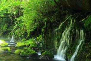 秋田県 夏の元滝伏流水の写真素材 [FYI00315246]