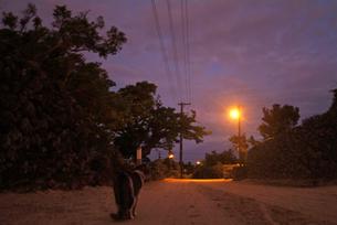 竹富島夜明け前の砂道の素材 [FYI00315570]