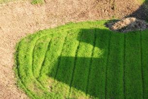 小さな丸い畑の写真素材 [FYI00315600]