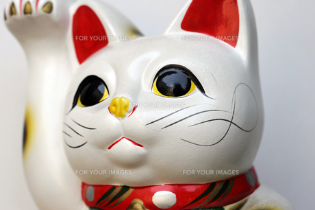招き猫斜めの写真素材 [FYI00315655]