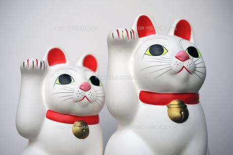 招き猫兄弟の写真素材 [FYI00315657]