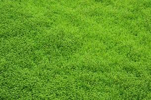群生する雑草の素材 [FYI00315692]