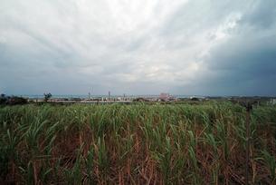 台風接近の石垣島の写真素材 [FYI00315723]