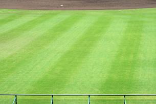外野の芝生の写真素材 [FYI00315731]