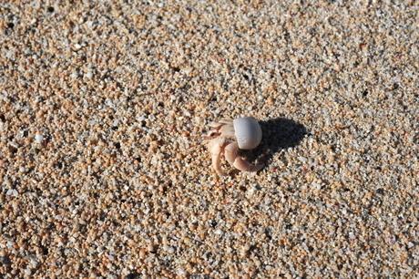 久高島砂浜のヤドカリの写真素材 [FYI00315834]