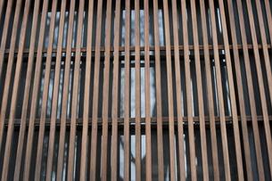 格子窓の写真素材 [FYI00315985]