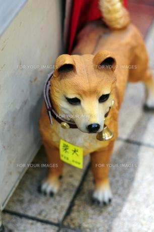 露店販売されている柴犬-2の写真素材 [FYI00316098]