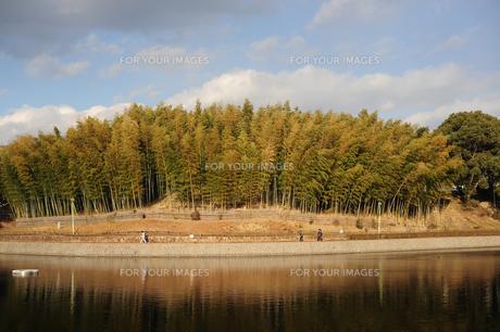 竹林と池-2の写真素材 [FYI00316106]