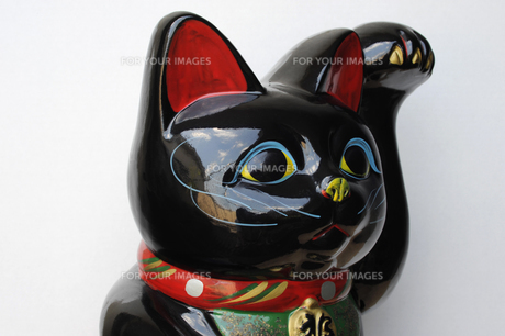 黒い招き猫-1の写真素材 [FYI00316144]