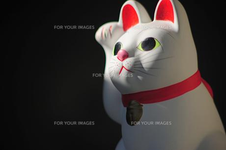 招き猫の横顔の写真素材 [FYI00316152]