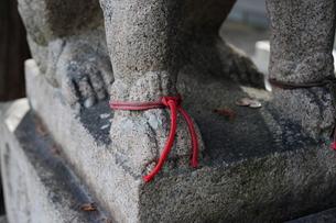 神社の狛犬-8の素材 [FYI00316154]