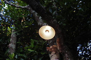 フクギ並木のランプ-3の写真素材 [FYI00316283]