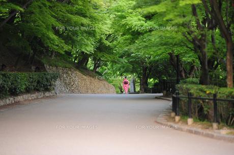 新緑の散歩道の写真素材 [FYI00316436]