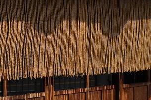 縄暖簾-1の写真素材 [FYI00316497]