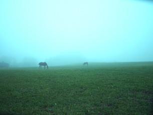 霧の丘と草をはむ馬の素材 [FYI00316802]