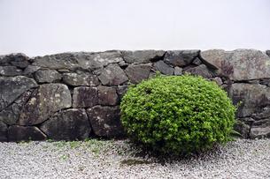 石垣と植木の写真素材 [FYI00316804]