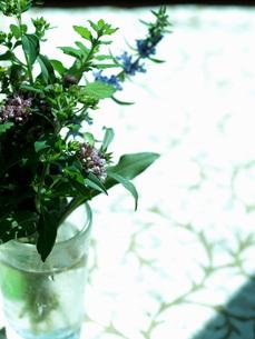 ハーブの花束の素材 [FYI00316815]