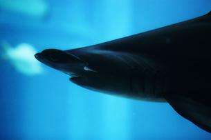 怖い鮫の写真素材 [FYI00316869]