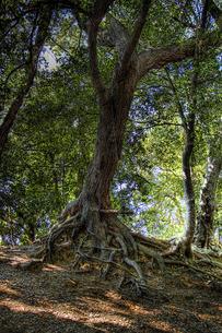 老木とブランコの写真素材 [FYI00316872]