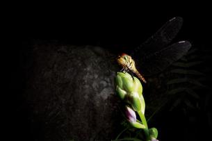 森のトンボの写真素材 [FYI00316890]
