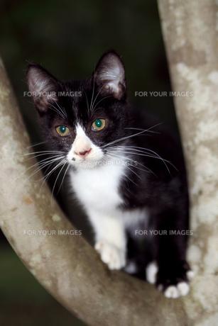 木の上の猫の素材 [FYI00316894]