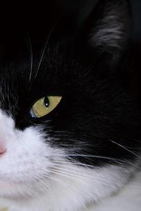 白黒ネコの写真素材 [FYI00316898]