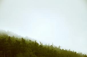富士山五合目の森の写真素材 [FYI00316952]