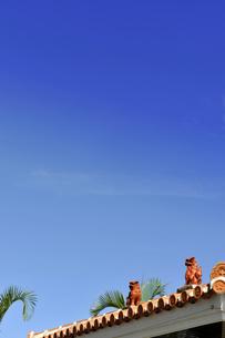 空を眺めるシーサーの写真素材 [FYI00316972]